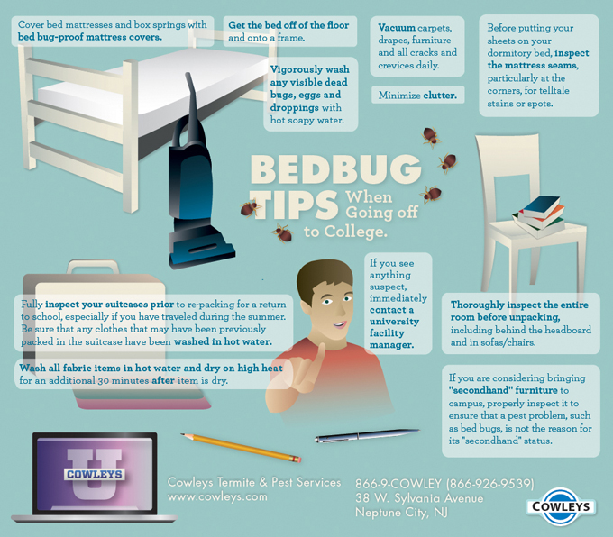 bed bugs at college 3