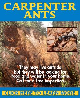Homeowners Beware - 'Tis the Season for Termites