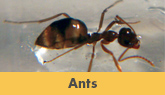 Ant Control Solutions from Trenton's Experts