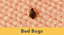 We Are New Jersey's Bed Bug Removal Experts! - Learn More