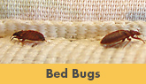 Bed Bug Treatment in Trenton, Edison & Nearby