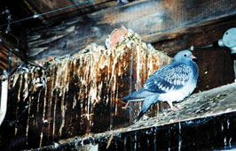 Bird damage prevention in Trenton & nearby