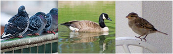 Professional Bird Control Specialists in Mercer, Ocean, Monmouth, Middlesex County