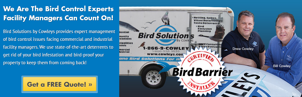 Professional Bird Control Specialists by Cowleys owners
