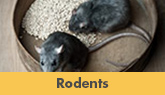 We Are Greater New Jersey Rodent Control Experts! - Learn More