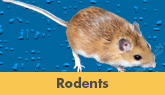 Rodent Control in New Jersey