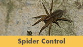 Spider Control in New Jersey