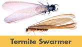 Termite Control Services in Trenton, Toms River, Edison, Brick, NJ