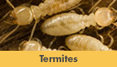 We Are Greater New Jersey Termite Removal Experts! - Learn More