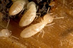 New-Jersey-termite-control